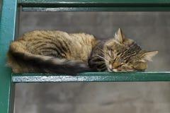 Gato el dormir en las escaleras Fotos de archivo