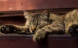Gato el dormir en las escaleras Fotografía de archivo libre de regalías