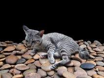 Gato el dormir que descansa sobre la grava imagen de archivo libre de regalías