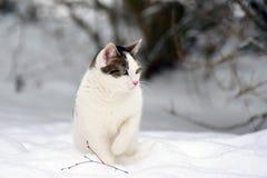 Gato el invierno Imagen de archivo libre de regalías