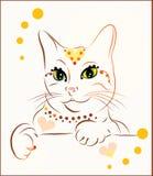 Gato elegante Imagens de Stock