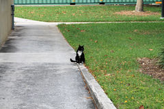 Gato elegante del smoking Foto de archivo