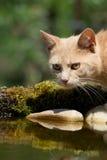 Gato em bebedores do pássaro Fotos de Stock Royalty Free