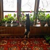 Gato em casa foto de stock royalty free