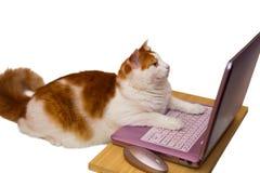 Gato em linha imagem de stock