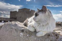 Gato em ruínas antigas perto do castelo em Paphos, Chipre - n imagens de stock