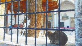 Gato em Sarajevo no od dianteiro a mesquita durante o inverno fotografia de stock royalty free
