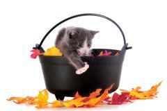 Gato-em-Treinamento de Halloween Foto de Stock