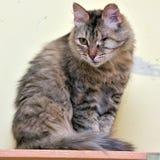 gato em um abrigo foto de stock royalty free