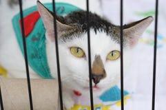 Gato em um abrigo foto de stock
