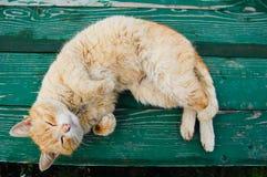 Gato em um banco Foto de Stock Royalty Free