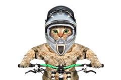 Gato em um capacete em uma bicicleta foto de stock