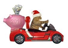 Gato em um carro vermelho com um mealheiro imagem de stock
