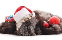 Gato em um chapéu do Natal em um casaco de pele Imagens de Stock Royalty Free