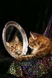 Gato em um espelho Fotografia de Stock