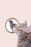 Gato em um espelho Foto de Stock Royalty Free