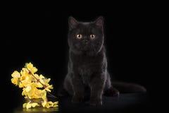 Gato em um fundo isolado Imagens de Stock Royalty Free