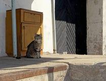 Gato em um fundo retro Imagem de Stock