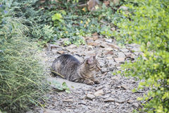 Gato em um jardim Fotografia de Stock Royalty Free