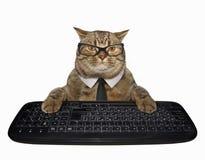 Gato em um laço com teclado de computador imagens de stock