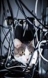Gato em um lugar perigoso fotos de stock