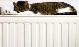 Gato em um radiador fotografia de stock