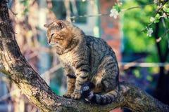 Gato em um ramo de uma árvore de maçã Imagem de Stock