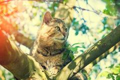 Gato em um ramo de uma árvore de maçã Fotos de Stock