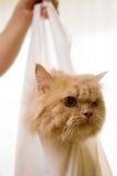 Gato em um saco #2 fotografia de stock