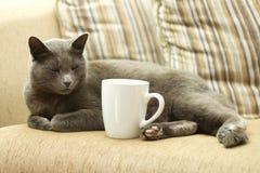 Gato em um sofá com copo branco Imagens de Stock Royalty Free