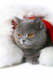 Gato em um tampão de Santa Klaus. Fotos de Stock Royalty Free