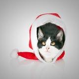 Gato em um tampão de ano novo. O gatinho esconde no chapéu vermelho de Santa Claus Fotos de Stock Royalty Free