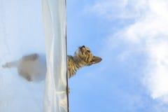 Gato em um telhado Fotos de Stock