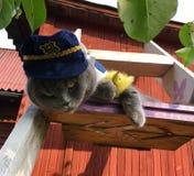 Gato em um uniforme da polícia com o rato Fotos de Stock