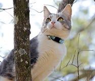 Gato em uma árvore que olha para fora em seu mundo Fotos de Stock