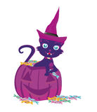 Gato em uma abóbora de Dia das Bruxas Fotografia de Stock