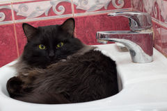 Gato em uma bacia Imagens de Stock Royalty Free