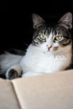 Gato em uma caixa Fotos de Stock Royalty Free