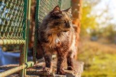 Gato em uma cerca Imagem de Stock