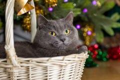 Gato em uma cesta sob uma árvore de Natal Imagem de Stock
