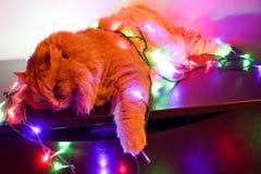 Gato em uma festão Fotos de Stock Royalty Free