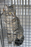 Gato em uma gaiola imagens de stock