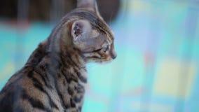 Gato em uma gaiola video estoque
