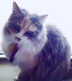 Gato em uma janela Imagem de Stock