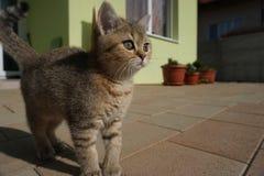 Gato em uma jarda Imagem de Stock Royalty Free