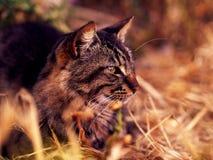 Gato em uma luz morna Fotos de Stock Royalty Free