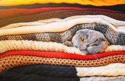Gato em uma pilha de roupa morna Foco seletivo foto de stock royalty free