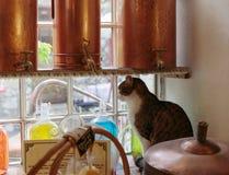 Gato em uma soleira no laboratório antigo do perfume na vila Imagem de Stock
