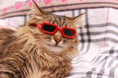 Gato em vidros vermelhos Fotografia de Stock Royalty Free