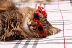 Gato em vidros vermelhos e no chapéu vermelho Fotografia de Stock Royalty Free